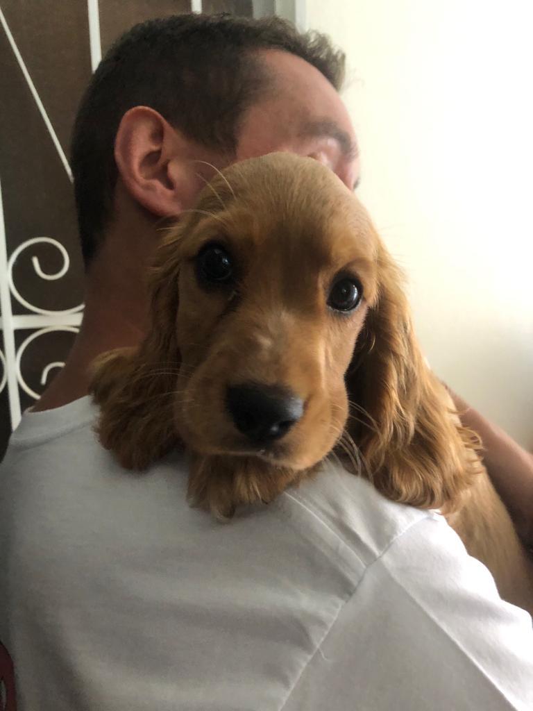 A man holding a spaniel puppy